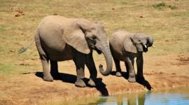 SUDAFRICA COSTA Y CULTURA: KRUGER, ZULULAND Y CIUDAD DEL CABO